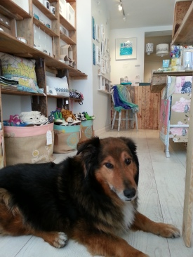 Dylan the dog enjoys his new home and gets spoiled rotten by customers with treats and cuddles!